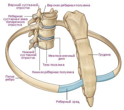 Остеохондроз грудного отдела позвоночника симптомы