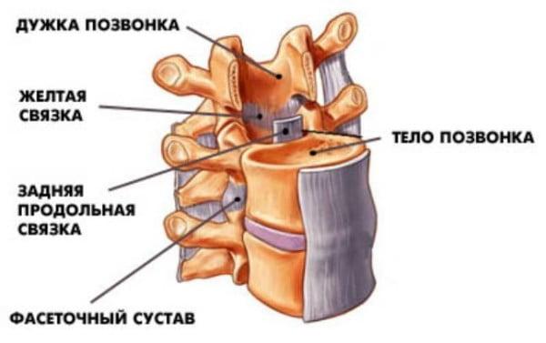 peyton-manning-neck-spine-xray