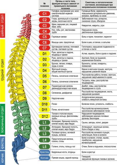 Анатомия позвоночного столба и отдельных