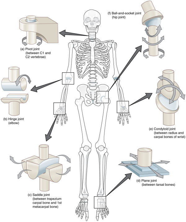 Все суставы человека таблица у меня болит правое колено