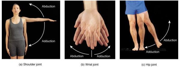 Изображение - Плечевой сустав простой или сложный F07.07.L.150-600x223