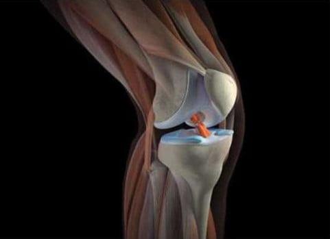 коленный сустав строение