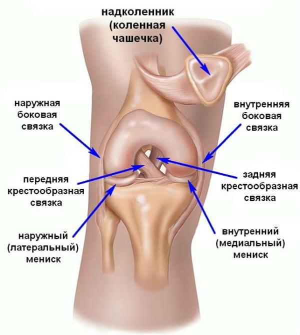 Изображение - Коленный сустав строение и функции hrustyat-sust-vstelo-4_01-600x669