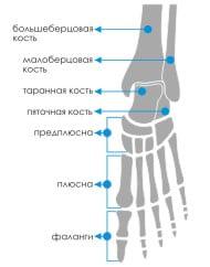 Изображение - Движения в голеностопном суставе end26