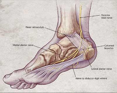 heel-anatomy