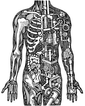 """Костно мышечная система человека на """"вульгарном"""" языке"""