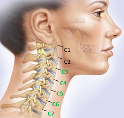 healthy-cervical-spine