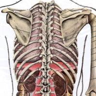 Остеохондроз грудного отдела позвоночника — симптомы, причины диагностика и лечение