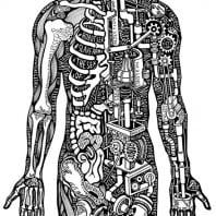 Костно мышечная система человека на «вульгарном» языке